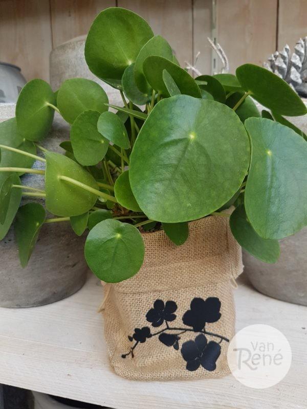 Van Rene Jute zakje orchidee zwart